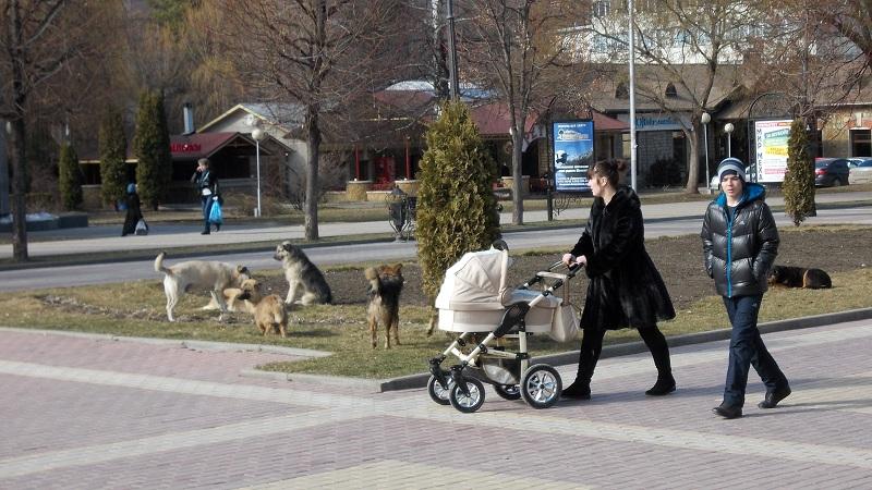 Кисловодмск Курортный бульвар Стая собак